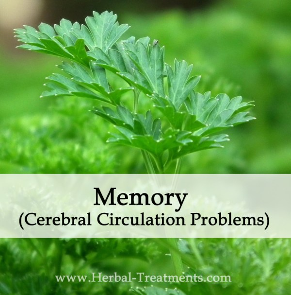 Herbal Medicine for Memory (Cerebral Circulation Problems)
