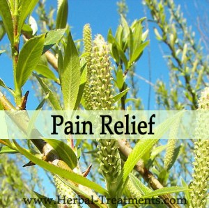 Herbal Treatments for Pain Relief