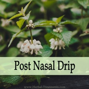 Herbal Medicine for Post Nasal Drip