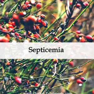 Herbal Medicine for Septicemia