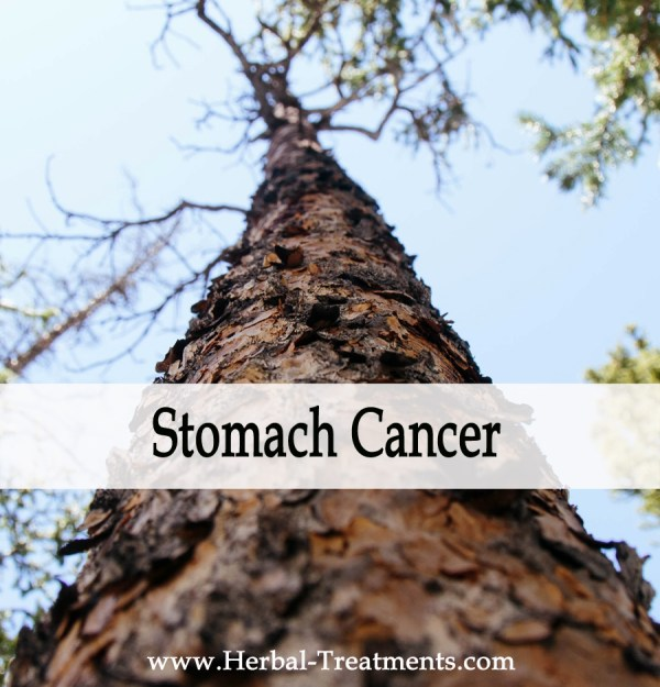 Herbal Medicine for Stomach Cancer Recovery & Prevention