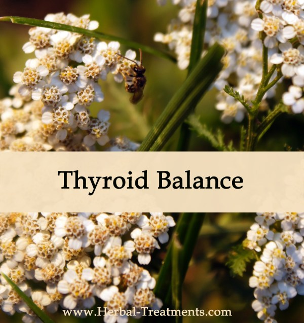 Herbal Medicine for Thyroid Recovery & Balance