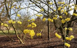 Why Witch Hazel  is in the Herbal Treatment for Painful Periods with Heavy Bleeding