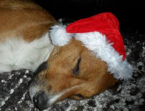 Keeping Pets Safe Over Christmas