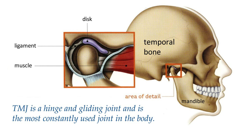medium resolution of eliminate grinding and clenching fast with pain free non surgical tmj treatment therapy