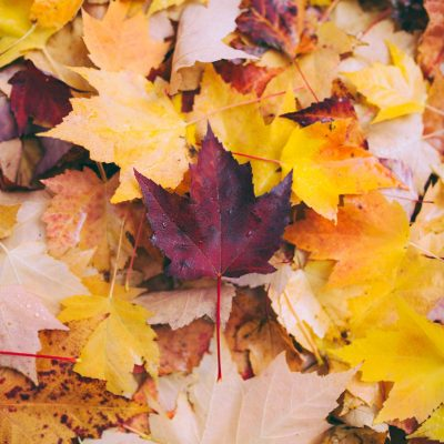 The Spiritual Meaning of Autumn