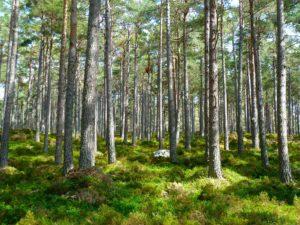 forest bathing blog
