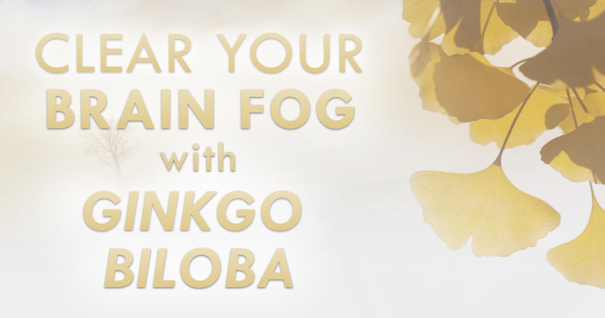 Clear Your Brain Fog With Ginkgo Biloba