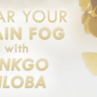 Clear Your Brain Fog with Ginkgo Biloba