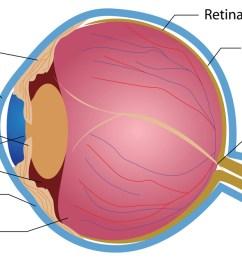 eye anatomy [ 1910 x 660 Pixel ]