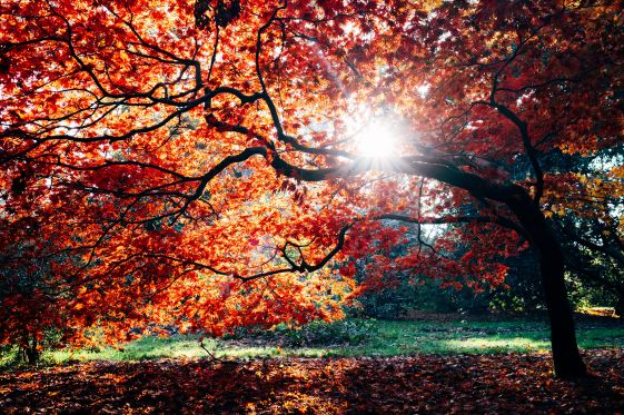 Let's fall in love with fall