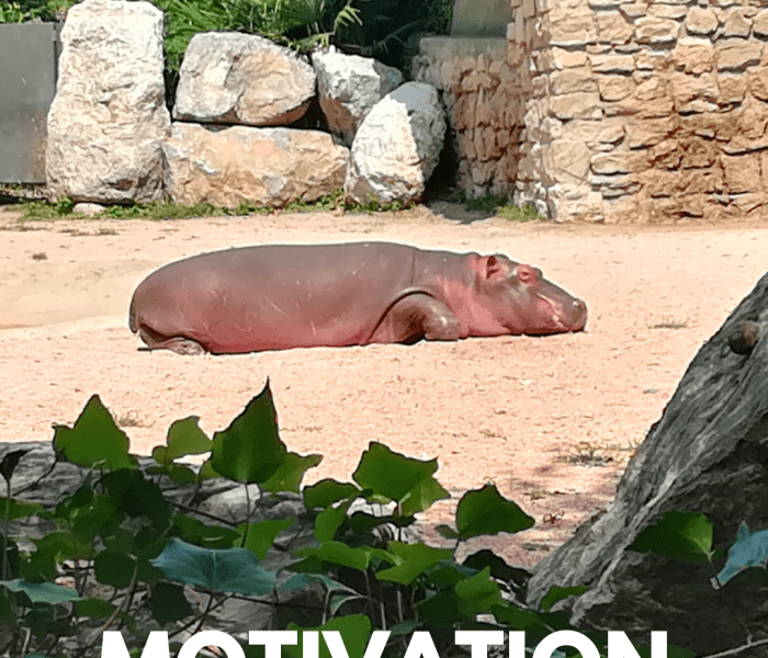 How To Stay Motivated When Everything Goes Wrong.