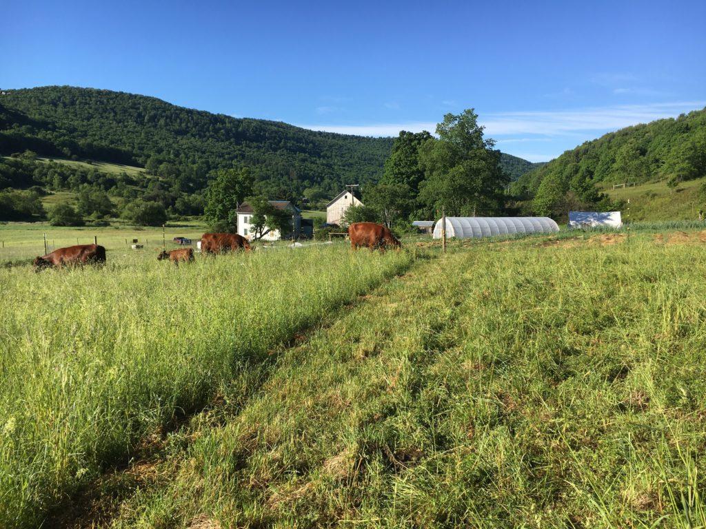 Northeast Whole Farm Planning Training For Ag Educators