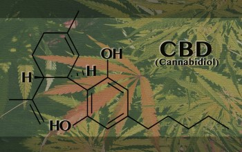 Video:  How CBD, Cannabis Oil is Made