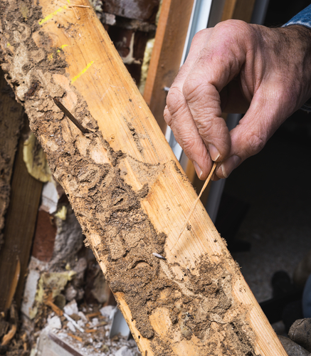 Termite and Wood Damage