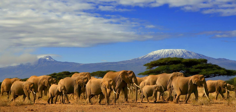 Elephants-Amboseli.jpg