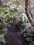 Waitomo-Trail-Run_18