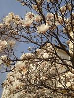 MAS-2012-03-23-DSC03796