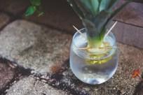 frozen pineapple + coconut daiquiris | my dad's cocktail garden | holly & flora