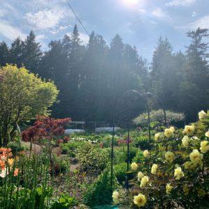 garden sunlight