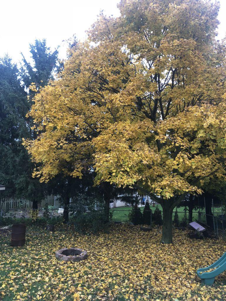 Crispy fall backyard