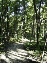 Hiking near Gibraltar Rock. Photos by Holly Tierney-Bedord. All rights reserved.