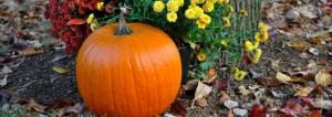 Festivais de outono do Arizona |  Holly's Bird Nest 4