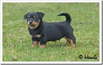 puppy_3