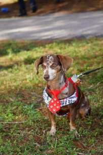 473_DSC01891 Join the 2nd annual Be Mine dog show at Hollywoof dog park