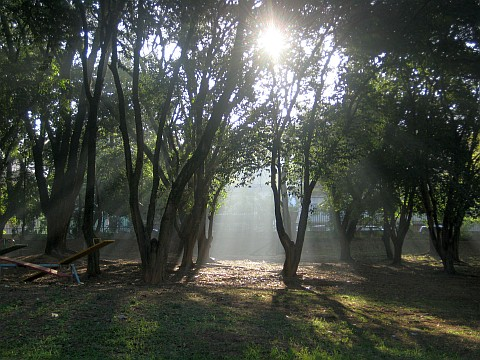 Sol entrando por entre as folhas das árvores do parque
