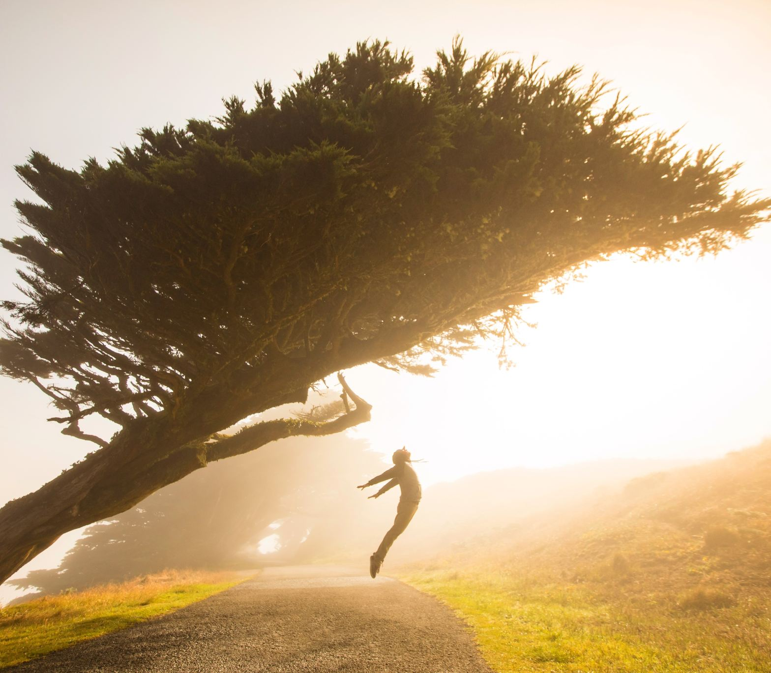 silhouette of person jumping under tree