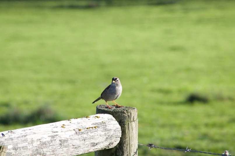 bird at Abott's Lagoon