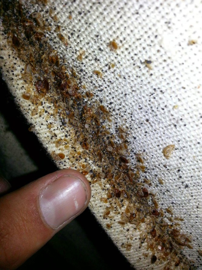 Signs Of Bed Bugs On A Matress