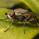 Fluebekæmpelse