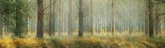 Danmarks skove, nu og i fremtiden
