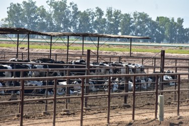 El Toro Feedlot to Expand by as Much as 1,700 Cattle