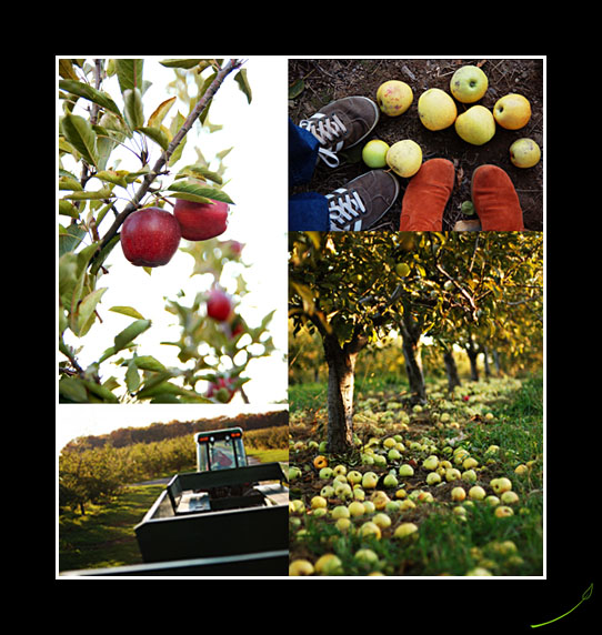 apples_shoes.jpg