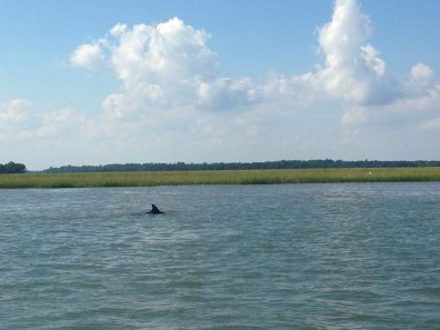 Dolphins3
