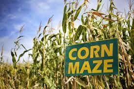 HSYTH Corn Maze