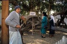 Photo: Norbert Schiller, visitors admiring the the Virgin Tree