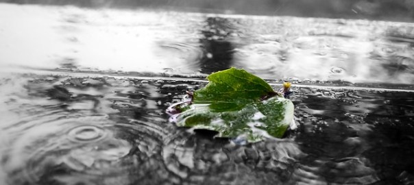 tragic death, leaf floating in rain