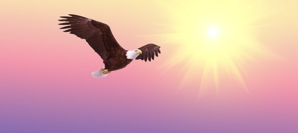 end nationalism, bald eagle flying toward heaven