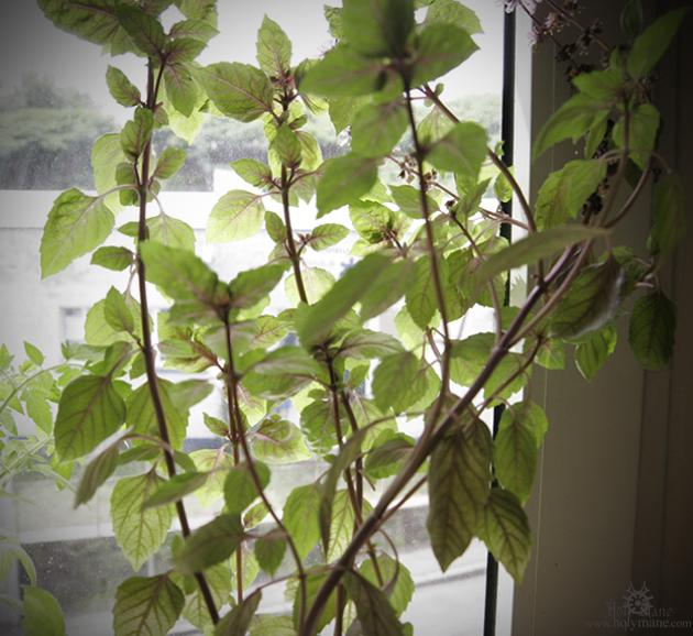 plants_880