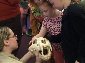 looking at lion skull