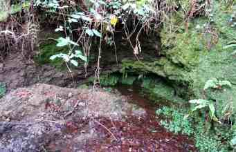 St Peter& St Paul's Well, near Skibbereen, home to two blessed eels