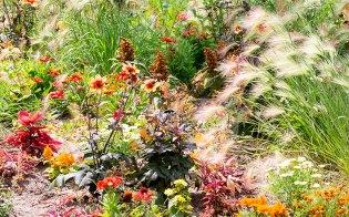 Land-bloemenveld-zomer