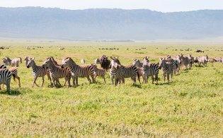Landschap-Afrika-Girafhorizonlijn