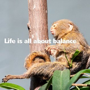 life-about-balance-nw