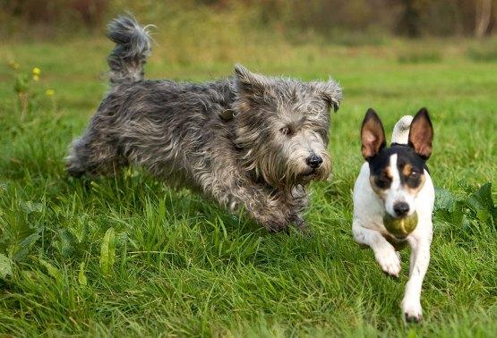 timmie-en-andere-hond