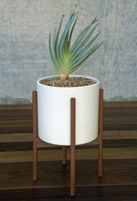 Case Study Planter with Stand